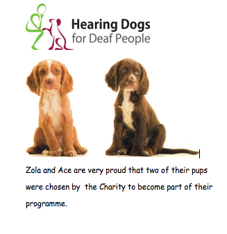 Hearing Dogs endorsement